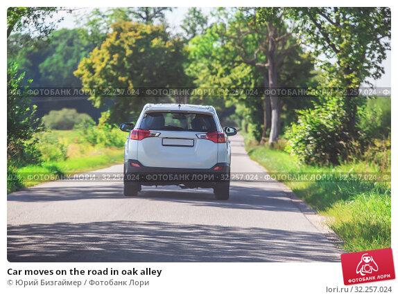 Купить «Car moves on the road in oak alley», фото № 32257024, снято 26 июля 2018 г. (c) Юрий Бизгаймер / Фотобанк Лори