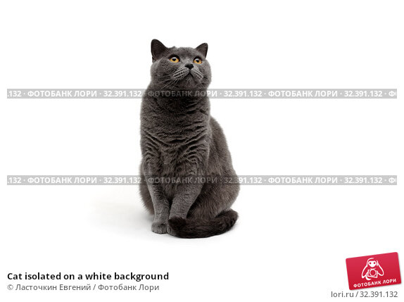 Cat isolated on a white background. Стоковое фото, фотограф Ласточкин Евгений / Фотобанк Лори