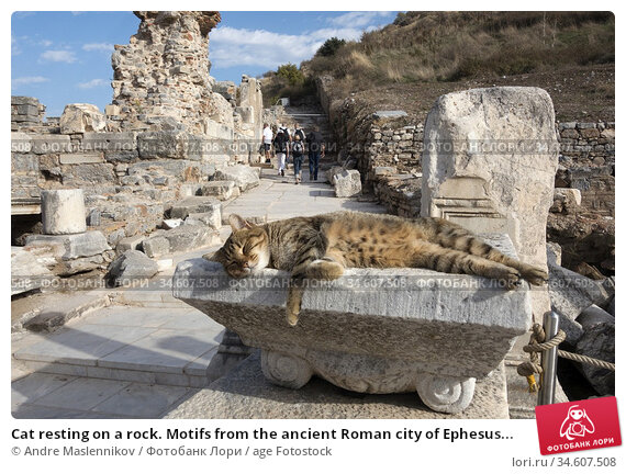 Cat resting on a rock. Motifs from the ancient Roman city of Ephesus... Стоковое фото, фотограф Andre Maslennikov / age Fotostock / Фотобанк Лори