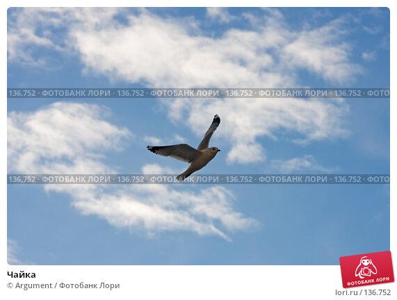 Чайка, фото № 136752, снято 20 ноября 2007 г. (c) Argument / Фотобанк Лори