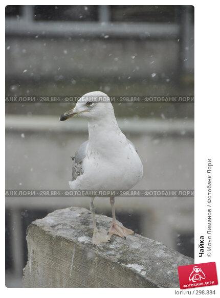 Чайка, фото № 298884, снято 16 февраля 2008 г. (c) Илья Лиманов / Фотобанк Лори