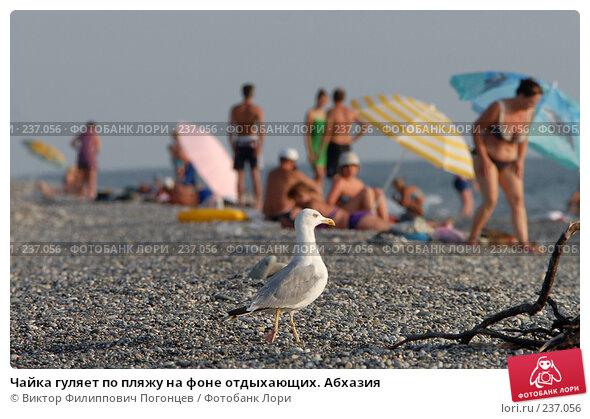 Чайка гуляет по пляжу на фоне отдыхающих. Абхазия, фото № 237056, снято 27 августа 2006 г. (c) Виктор Филиппович Погонцев / Фотобанк Лори