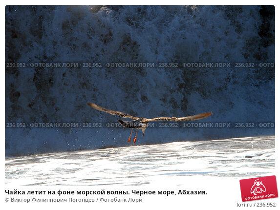 Чайка летит на фоне морской волны. Черное море, Абхазия., фото № 236952, снято 30 августа 2006 г. (c) Виктор Филиппович Погонцев / Фотобанк Лори