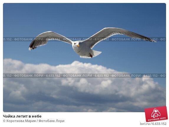 Чайка летит в небе. Стоковое фото, фотограф Короткова Мария / Фотобанк Лори