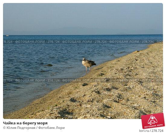 Чайка на берегу моря, фото № 278724, снято 27 июня 2007 г. (c) Юлия Селезнева / Фотобанк Лори