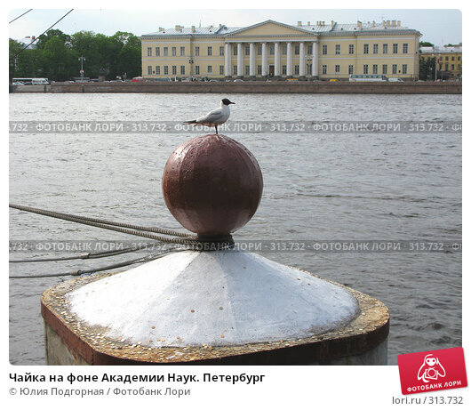 Чайка на фоне Академии Наук. Петербург, фото № 313732, снято 6 июня 2008 г. (c) Юлия Селезнева / Фотобанк Лори