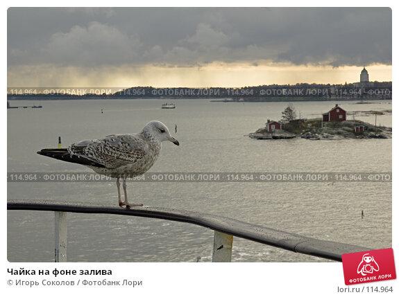 Чайка на фоне залива, фото № 114964, снято 21 августа 2017 г. (c) Игорь Соколов / Фотобанк Лори
