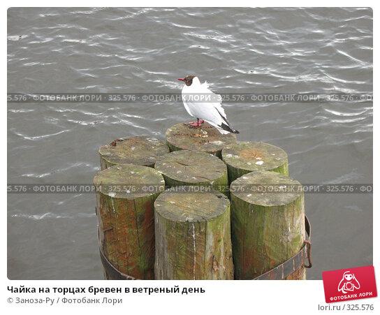 Купить «Чайка на торцах бревен в ветреный день», фото № 325576, снято 12 июня 2008 г. (c) Заноза-Ру / Фотобанк Лори