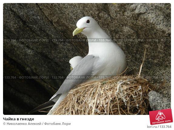 Чайка в гнезде, фото № 133764, снято 4 июля 2006 г. (c) Николаенко Алексей / Фотобанк Лори