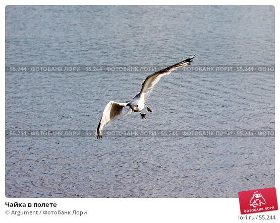 Чайка в полете, фото № 55244, снято 1 августа 2006 г. (c) Argument / Фотобанк Лори