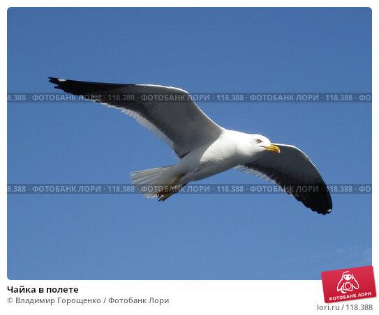 Чайка в полете, фото № 118388, снято 13 июля 2005 г. (c) Владимир Горощенко / Фотобанк Лори