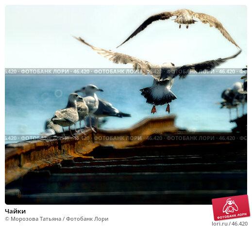 Чайки, фото № 46420, снято 4 августа 2004 г. (c) Морозова Татьяна / Фотобанк Лори