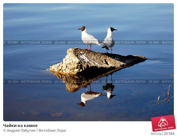 Купить «Чайки на камне», фото № 29584, снято 2 апреля 2007 г. (c) Андрей Лабутин / Фотобанк Лори
