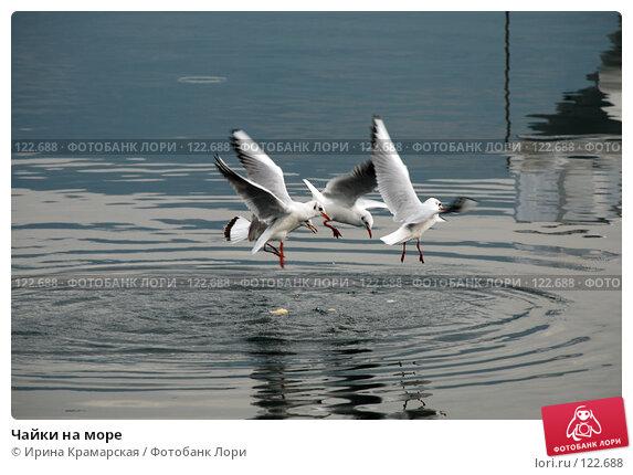 Чайки на море, фото № 122688, снято 5 октября 2007 г. (c) Ирина Крамарская / Фотобанк Лори