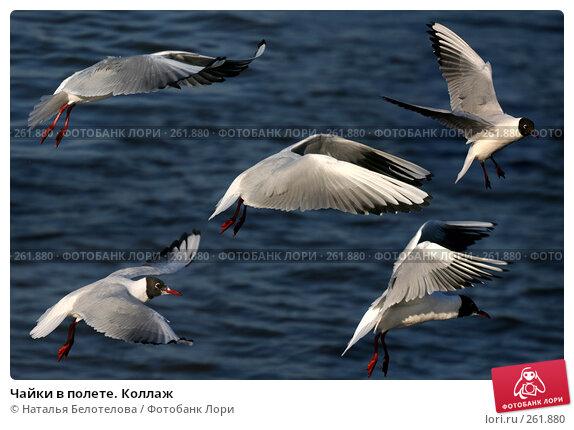 Купить «Чайки в полете. Коллаж», фото № 261880, снято 29 марта 2008 г. (c) Наталья Белотелова / Фотобанк Лори
