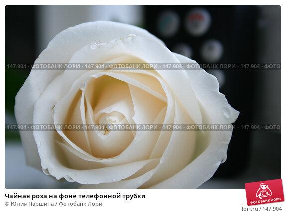 Чайная роза на фоне телефонной трубки, фото № 147904, снято 18 ноября 2007 г. (c) Юлия Паршина / Фотобанк Лори
