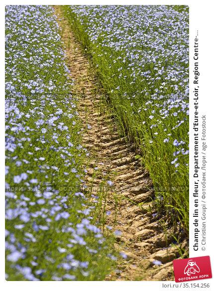 Champ de lin en fleur, Departement d'Eure-et-Loir, Region Centre-... Стоковое фото, фотограф Christian Goupi / age Fotostock / Фотобанк Лори