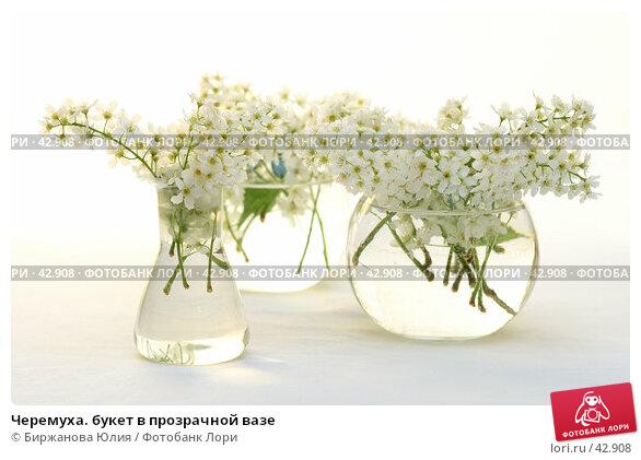 Купить «Черемуха. букет в прозрачной вазе», фото № 42908, снято 13 мая 2007 г. (c) Биржанова Юлия / Фотобанк Лори