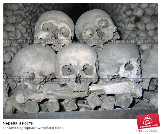 Черепа и кости, фото № 229364, снято 16 марта 2008 г. (c) Юлия Селезнева / Фотобанк Лори