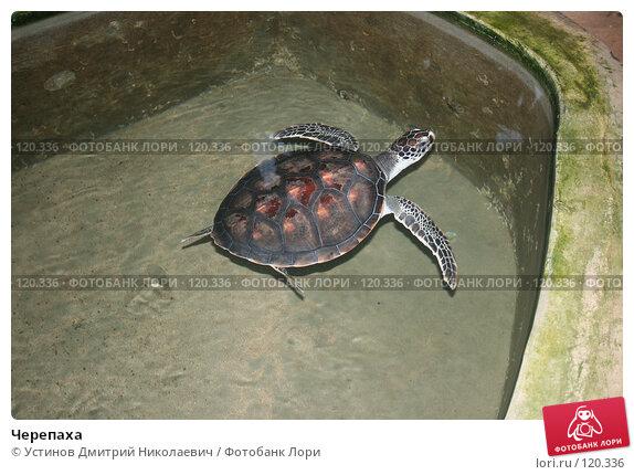 Черепаха, фото № 120336, снято 12 августа 2007 г. (c) Устинов Дмитрий Николаевич / Фотобанк Лори