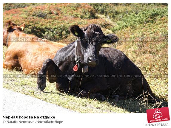 Черная корова на отдыхе, эксклюзивное фото № 104360, снято 24 октября 2016 г. (c) Natalia Nemtseva / Фотобанк Лори