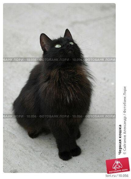 Черная кошка, фото № 10056, снято 24 июня 2006 г. (c) Сайганов Александр / Фотобанк Лори