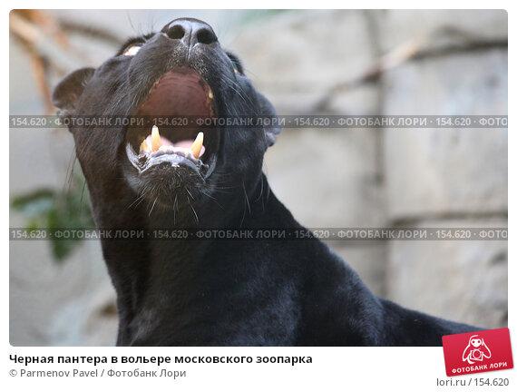 Черная пантера в вольере московского зоопарка, фото № 154620, снято 11 декабря 2007 г. (c) Parmenov Pavel / Фотобанк Лори