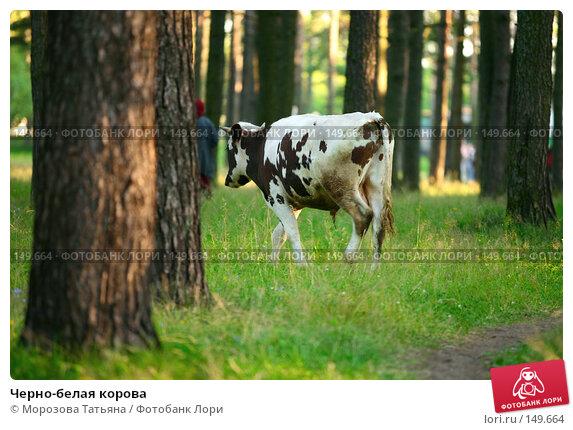 Купить «Черно-белая корова», фото № 149664, снято 28 июля 2007 г. (c) Морозова Татьяна / Фотобанк Лори