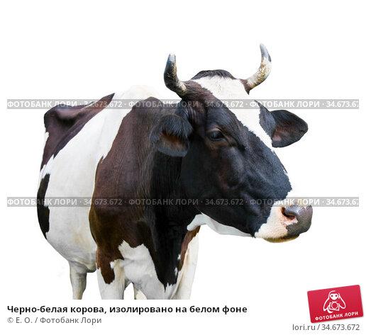 Черно-белая корова, изолировано на белом фоне. Стоковое фото, фотограф E. O. / Фотобанк Лори