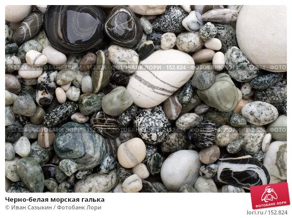 Черно-белая морская галька, фото № 152824, снято 9 ноября 2007 г. (c) Иван Сазыкин / Фотобанк Лори