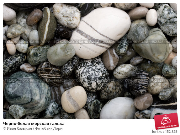 Черно-белая морская галька, фото № 152828, снято 9 ноября 2007 г. (c) Иван Сазыкин / Фотобанк Лори