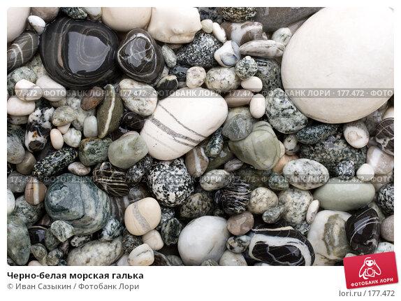 Черно-белая морская галька, фото № 177472, снято 9 ноября 2007 г. (c) Иван Сазыкин / Фотобанк Лори