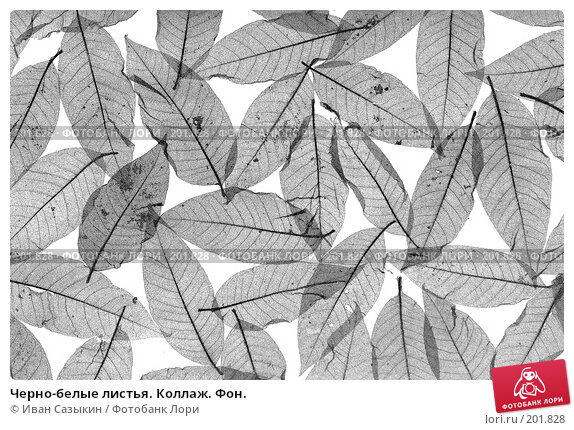 Купить «Черно-белые листья. Коллаж. Фон.», фото № 201828, снято 14 февраля 2008 г. (c) Иван Сазыкин / Фотобанк Лори