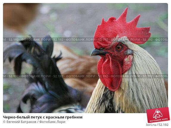 Черно-белый петух с красным гребнем, фото № 52192, снято 27 мая 2007 г. (c) Евгений Батраков / Фотобанк Лори