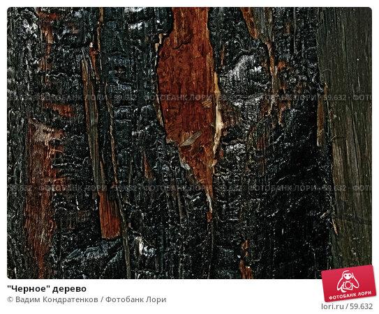 """""""Черное"""" дерево, фото № 59632, снято 23 октября 2016 г. (c) Вадим Кондратенков / Фотобанк Лори"""