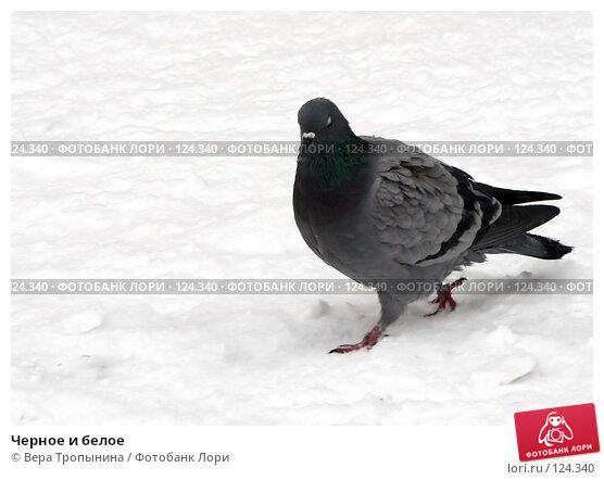 Черное и белое, фото № 124340, снято 22 января 2017 г. (c) Вера Тропынина / Фотобанк Лори