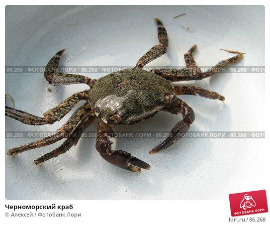 Купить «Черноморский краб», фото № 86268, снято 23 августа 2007 г. (c) Алексей / Фотобанк Лори