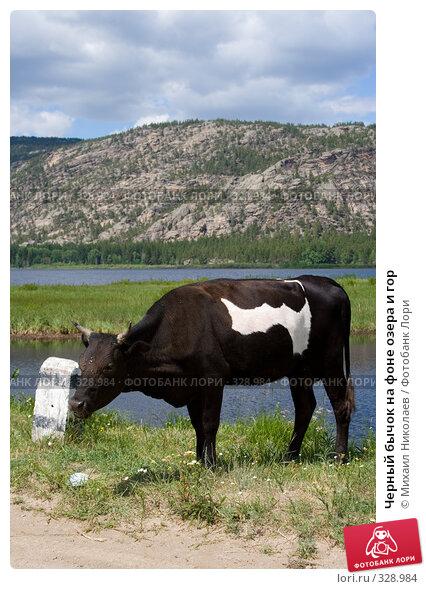 Черный бычок на фоне озера и гор, фото № 328984, снято 19 июня 2008 г. (c) Михаил Николаев / Фотобанк Лори