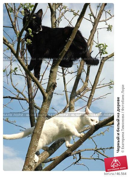 Черный и белый на дереве, фото № 46564, снято 20 мая 2007 г. (c) Екатерина Тимонова / Фотобанк Лори