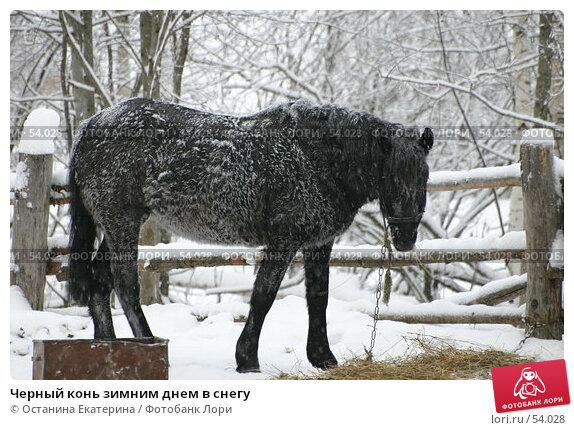 Черный конь зимним днем в снегу, фото № 54028, снято 7 января 2006 г. (c) Останина Екатерина / Фотобанк Лори