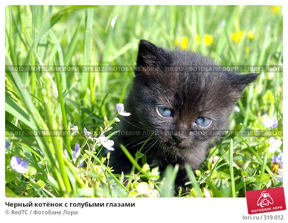 Черный котёнок с голубыми глазами, фото № 319012, снято 9 июня 2008 г. (c) RedTC / Фотобанк Лори