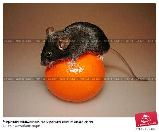 Черный мышонок на оранжевом мандарине, фото № 24680, снято 18 марта 2007 г. (c) Fro / Фотобанк Лори