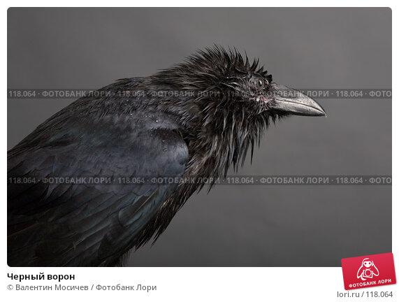 Купить «Черный ворон», фото № 118064, снято 27 октября 2007 г. (c) Валентин Мосичев / Фотобанк Лори