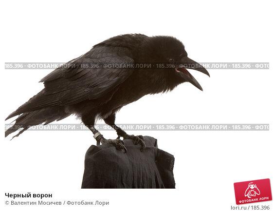Черный ворон, фото № 185396, снято 27 октября 2007 г. (c) Валентин Мосичев / Фотобанк Лори