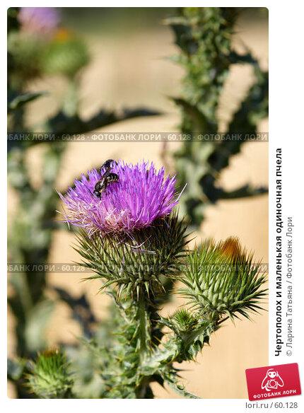 Чертополох и маленькая одиночная пчела, фото № 60128, снято 28 июня 2007 г. (c) Ларина Татьяна / Фотобанк Лори