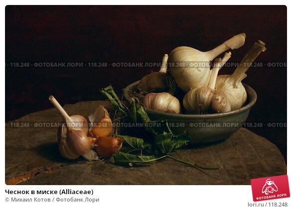 Чеснок в миске (Alliaceae), фото № 118248, снято 11 сентября 2005 г. (c) Михаил Котов / Фотобанк Лори