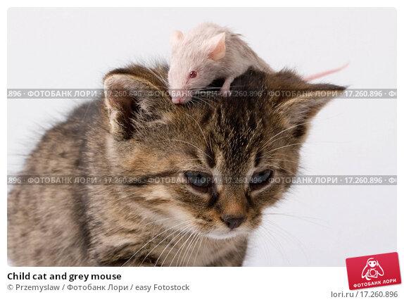Купить «Child cat and grey mouse», фото № 17260896, снято 8 декабря 2019 г. (c) easy Fotostock / Фотобанк Лори