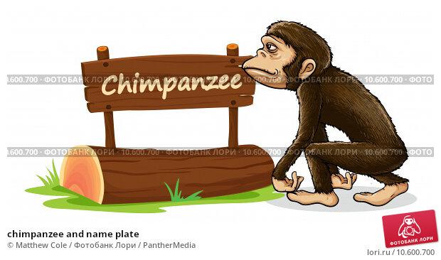 chimpanzee and name plate. Стоковая иллюстрация, иллюстратор Matthew Cole / PantherMedia / Фотобанк Лори