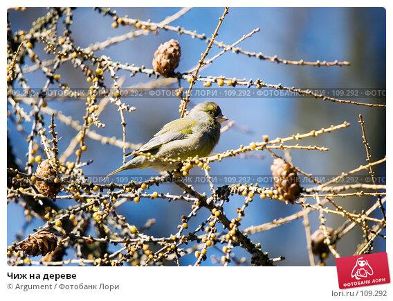 Чиж на дереве, фото № 109292, снято 12 апреля 2007 г. (c) Argument / Фотобанк Лори