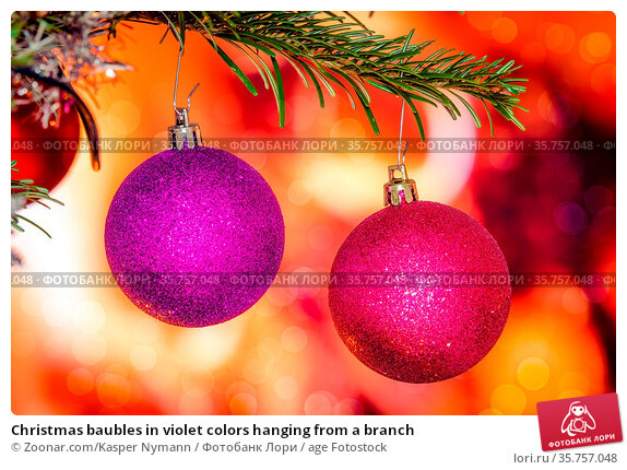 Christmas baubles in violet colors hanging from a branch. Стоковое фото, фотограф Zoonar.com/Kasper Nymann / age Fotostock / Фотобанк Лори
